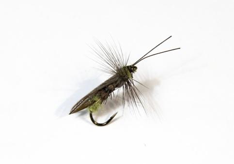 Tricóptero adulto