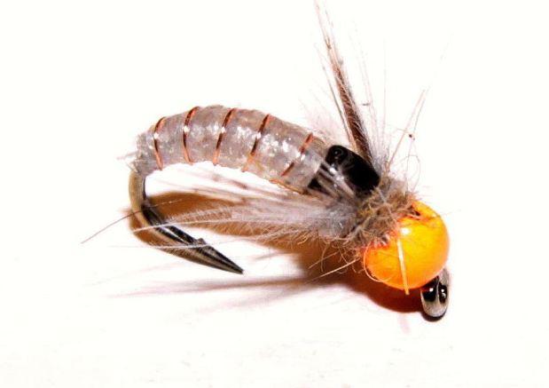 Ninfa tricóptero cabeza naranja