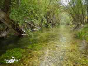 Taravilla, río Cabrillas