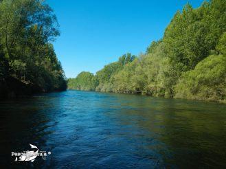 Quintana de Rueda río Esla (1)
