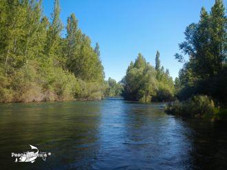 Quintana de Rueda río Esla (2)