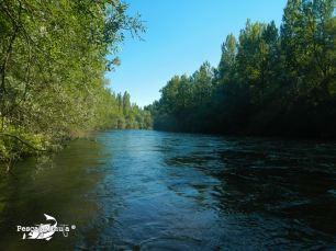 Quintana de Rueda río Esla (4)