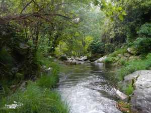 Rio Pelayos y Arbillas 15-05-2013 (1)