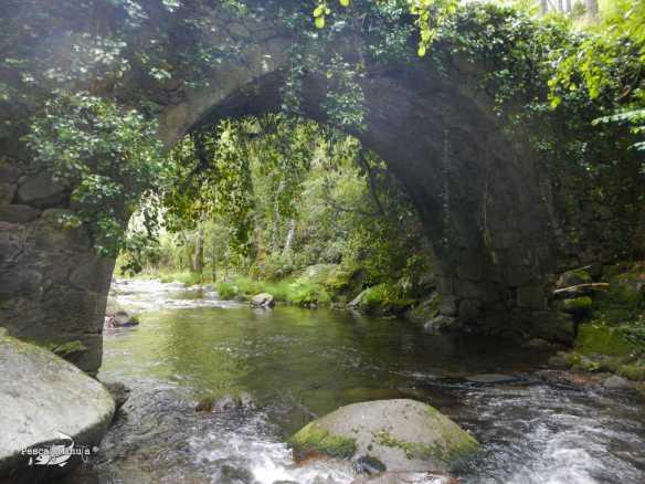 Rio Pelayos y Arbillas 15-05-2013 (2)