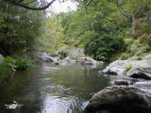 Rio Pelayos y Arbillas 15-05-2013 (6)