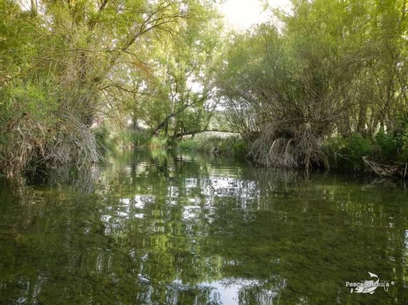 Cristinas río Cabriel 24-5-14 (3)
