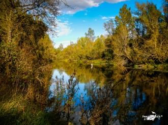 Pesquera - Río Esla