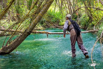 """The Image : """" Calambres """" in action , to fly fishing"""