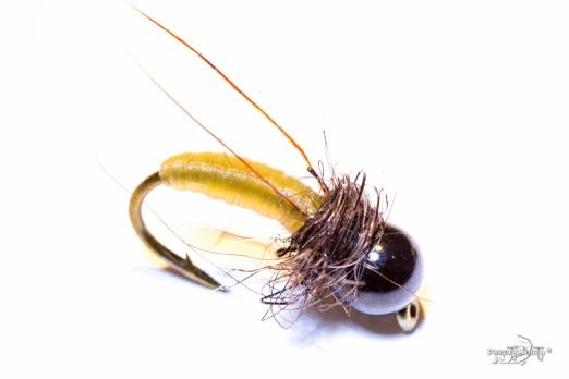 Caddis larvae