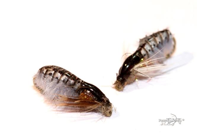 Larva checa