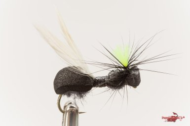 Wing ant hackle