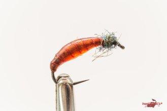 Orange larvae UV