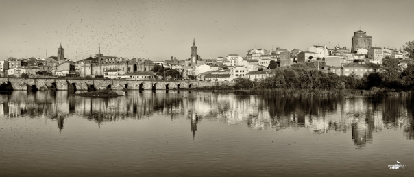 The image: hatching in Tormes river