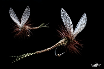 Mayfly wally wings extended